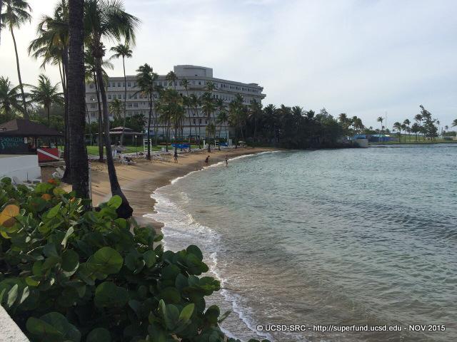 Beach near Caribe Hilton Hotel